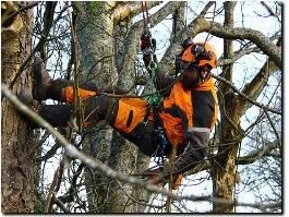 https://www.arborist-direct.co.uk/provider/glasgow-tree-surgeon/ website