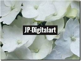 https://www.jp-digitalart.com/ website