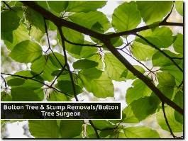 https://www.boltontreesurgeon.co.uk/ website