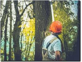 https://www.treesurgeongloucester.com/ website