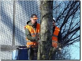 https://www.treecarestamford.com/ website