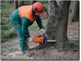 https://www.treeservicesslc.com/ website