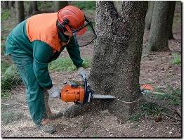 https://www.treeremovalsanmateo.com/ website