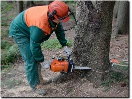 https://www.treeremovalcostamesa.com/ website
