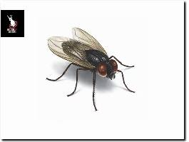 https://www.effectivepestsolutions.co.uk/ website