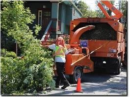 http://www.treeservicekansascitypro.com/ website