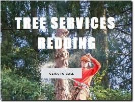https://www.treeservicesredding.com/ website