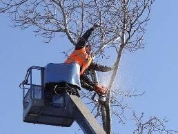 https://www.treeservicewheaton.com website