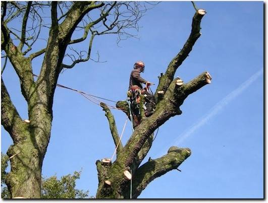 https://www.chester-tree-surgeon.co.uk/ website